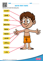 Science Body Parts worksheets Kindergarten