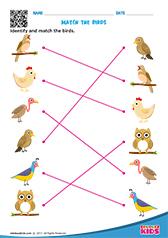 Science Birds worksheets Kindergarten